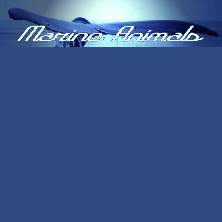 Follow on TWITTER @MarineAnimals1 !